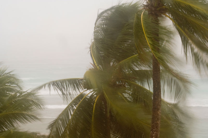 A palm tree blowing during a tropical storm.